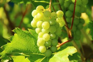 Quel avenir pour le marché de l'emploi dans le secteur du vin?